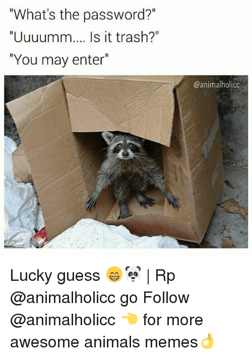 """Animals Memes: """"What's the password?""""  """"Uuuumm.... Is it trash?""""  """"You may enter  @animal holicc Lucky guess 😁🐼 