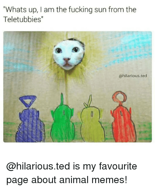 """Animals Meme: Whats up, I am the fucking sun from the  Teletubbies""""  @hilarious ted @hilarious.ted is my favourite page about animal memes!"""