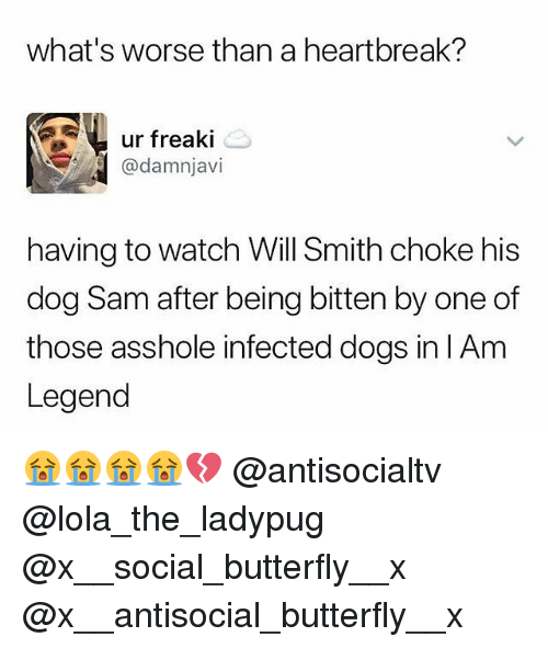 Dogs, Memes, and Will Smith: what's worse than a heartbreak?  ur freaki  @damnjavi  having to watch Will Smith choke his  dog Sam after being bitten by one of  those asshole infected dogs in IAm  Legend 😭😭😭😭💔 @antisocialtv @lola_the_ladypug @x__social_butterfly__x @x__antisocial_butterfly__x