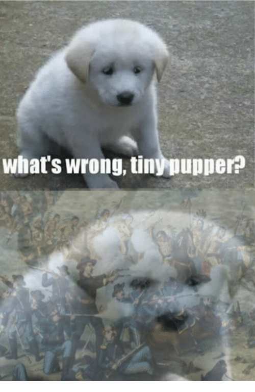 Controversial Cowboy, Wrongs, and Whats Wrong: what's wrong, tinypupperp