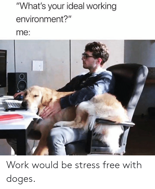 """doges: """"What's your ideal working  environment?""""  me: Work would be stress free with doges."""