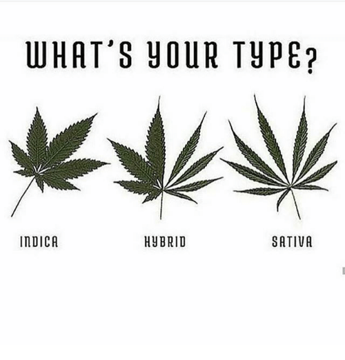 Whats Your Type: WHAT'S YOUR TYPE?  InDICA  HUBRID  SATIVA
