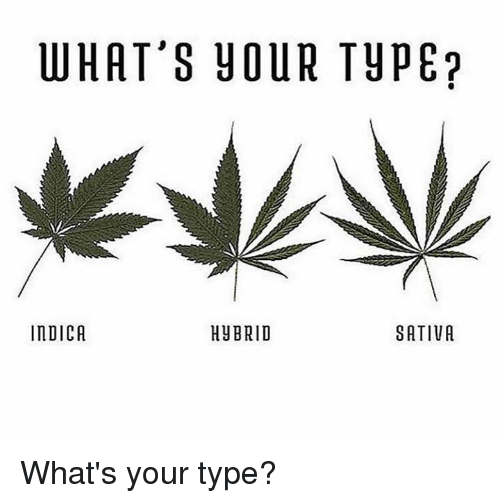 Memes, 🤖, and Sativa: WHAT'S YOUR TYPE  INDICA  HUBRID  SATIVA What's your type?