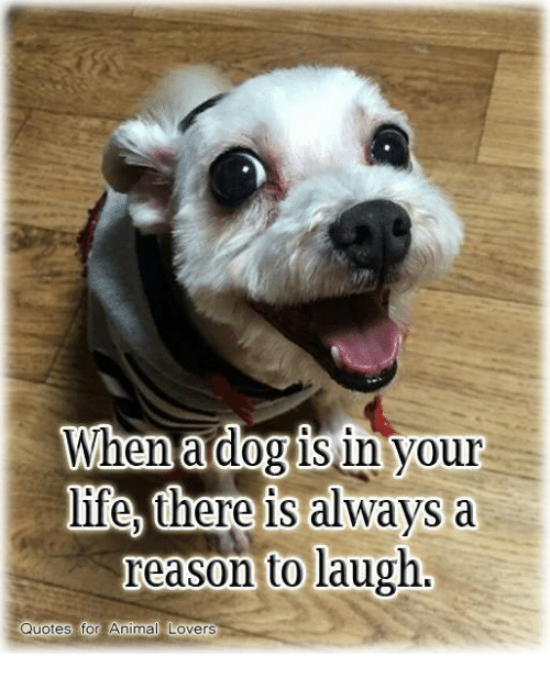 animal lover: When a dog in your  life, here is always a  reason to laugh.  Quotes for Animal Lovers