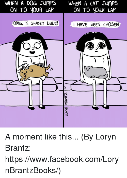 Facebook, Memes, and facebook.com: WHEN A DOG JUMPS  WHEN A CAT JumPS  ON TO YOUR LAP  ON TO YOUR LAP  Oma, hi sweet baby!  I HAVE BEEN CHOSEN A moment like this... (By Loryn Brantz: https://www.facebook.com/LorynBrantzBooks/)