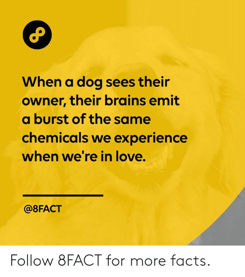 Chemicals: When a dog sees their  owner, their brains emit  a burst of the same  chemicals we experience  when we're in love.  @8FACT Follow 8FACT for more facts.