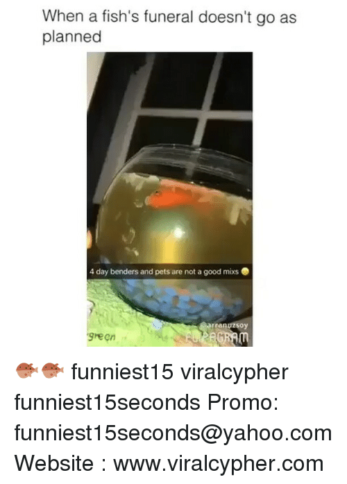 Funny, Pets, and Good: When a fish's funeral doesn't go as  planned  4 day benders and pets are not a good mixs .  rranuzsoy  green 🐡🐡 funniest15 viralcypher funniest15seconds Promo: funniest15seconds@yahoo.com Website : www.viralcypher.com