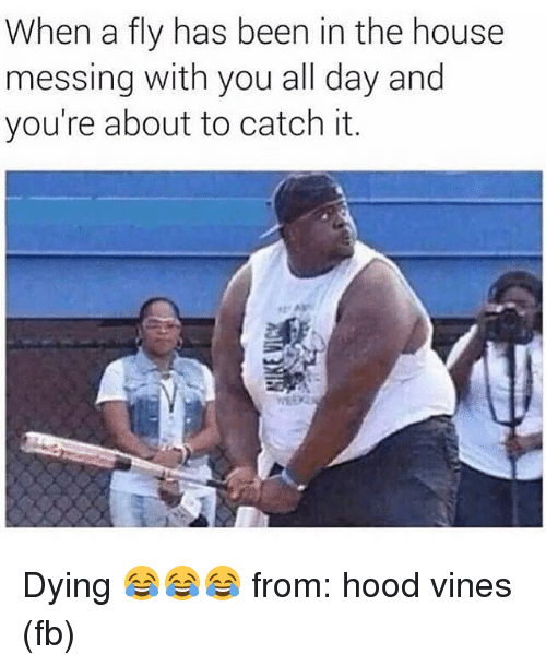 Mlb, Vine, and Vines: When a fly has been in the house  messing with you all day and  you're about to catch it. Dying 😂😂😂 from: hood vines (fb)