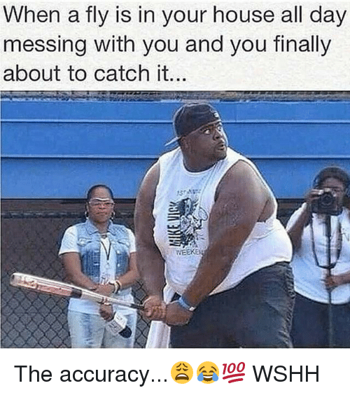 Memes, Wshh, and House: When a fly is in your house all day  messing with you and you finally  about to catch it.. The accuracy...😩😂💯 WSHH