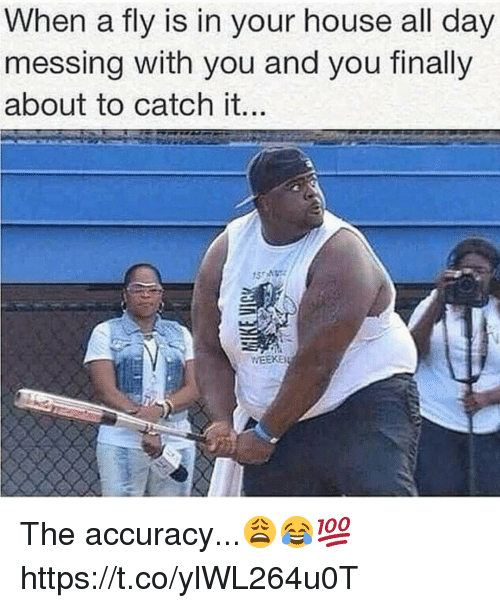 Memes, House, and 🤖: When a fly is in your house all day  messing with you and you finally  about to catch it The accuracy...😩😂💯 https://t.co/ylWL264u0T