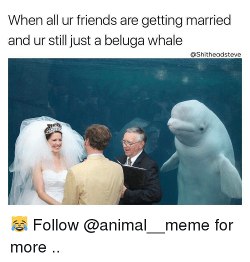 25+ Best Memes About Beluga Whale | Beluga Whale Memes