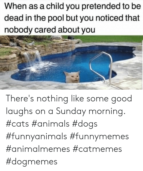 A Sunday: When as a child you pretended to be  dead in the pool but you noticed that  nobody cared about you There's nothing like some good laughs on a Sunday morning.  #cats #animals #dogs #funnyanimals #funnymemes #animalmemes #catmemes #dogmemes