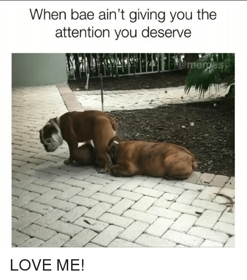 Bae, Love, and Memes: When bae ain't giving you the  attention you deserve LOVE ME!