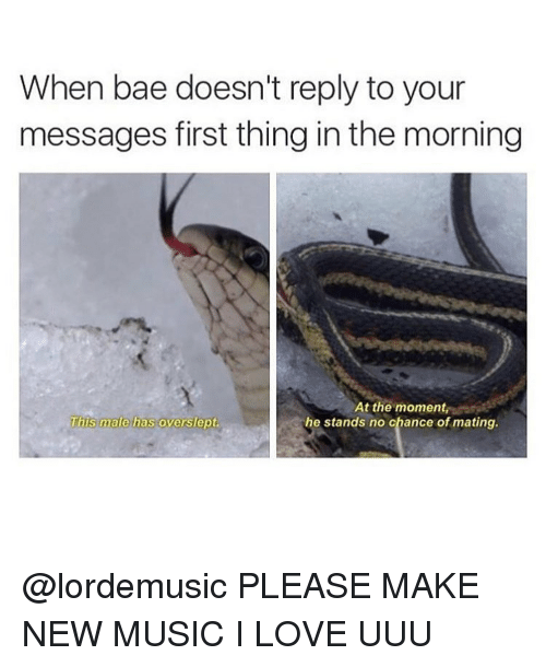 uuu: When bae doesn't reply to your  messages first thing inthe morning  At the moment  This male has overslept.  he stands no chance of mating. @lordemusic PLEASE MAKE NEW MUSIC I LOVE UUU