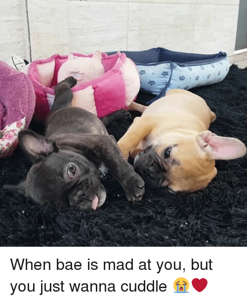 I Just Want To Cuddle With You: 25+ Best Memes About When Bae Is Mad At You