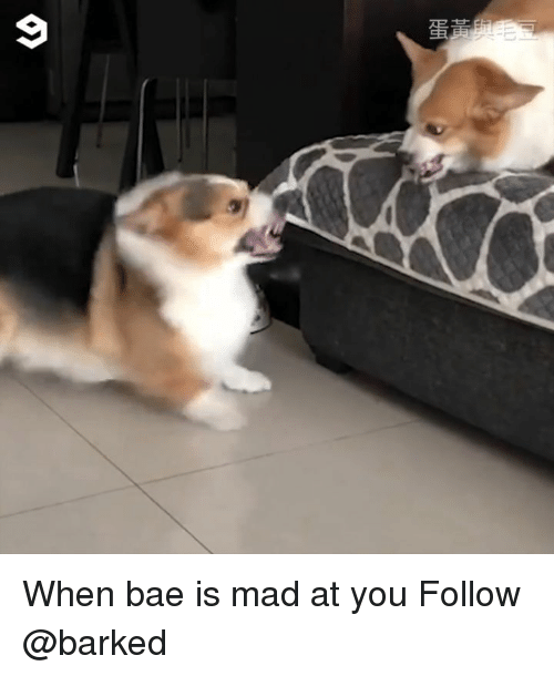 Bae, Memes, and Mad: When bae is mad at you Follow @barked