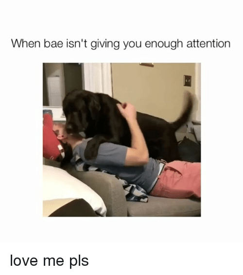 Bae, Love, and Girl Memes: When bae isn't giving you enough attention love me pls