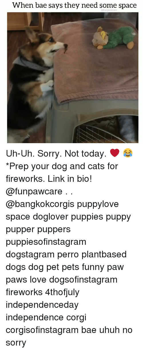 When Bae Says: When bae says they need some space  @funpawcare Uh-Uh. Sorry. Not today. ❤️ 😂*Prep your dog and cats for fireworks. Link in bio! @funpawcare . . @bangkokcorgis puppylove space doglover puppies puppy pupper puppers puppiesofinstagram dogstagram perro plantbased dogs dog pet pets funny paw paws love dogsofinstagram fireworks 4thofjuly independenceday independence corgi corgisofinstagram bae uhuh no sorry