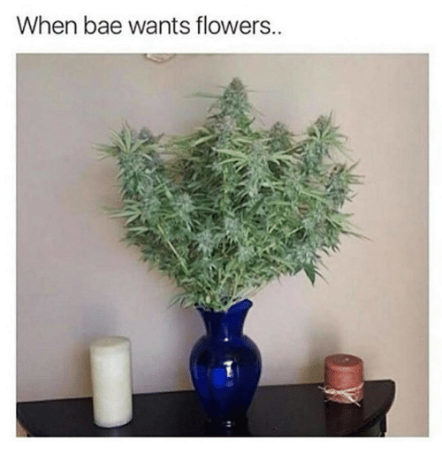 Bae, Memes, and Flowers: When bae wants flowers