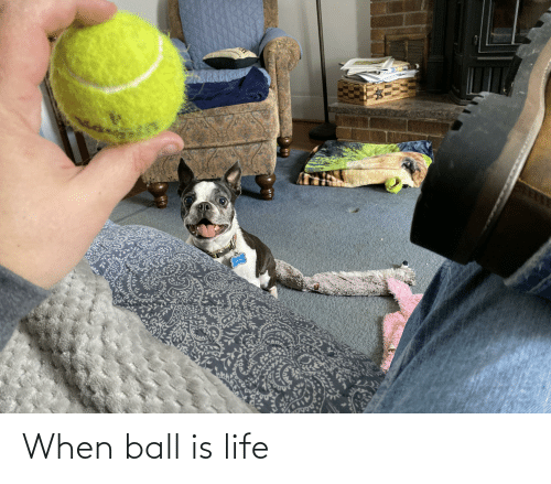 ball is life: When ball is life