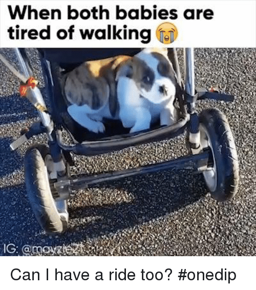 Memes, 🤖, and Can: When both babies are  tired of walking Can I have a ride too? #onedip