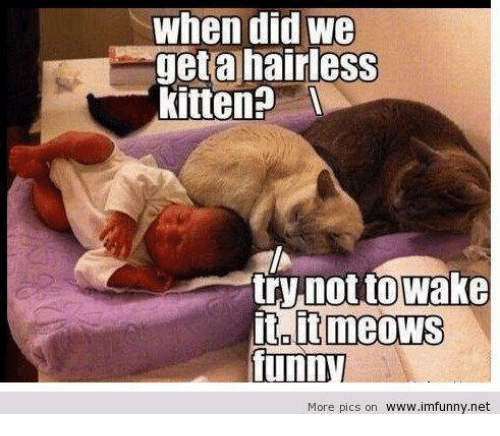 Dank, Kittens, and 🤖: when did we  get a hairless  Kitten?  try not to Wake  meows  funn  More pics on www.imfunny.net