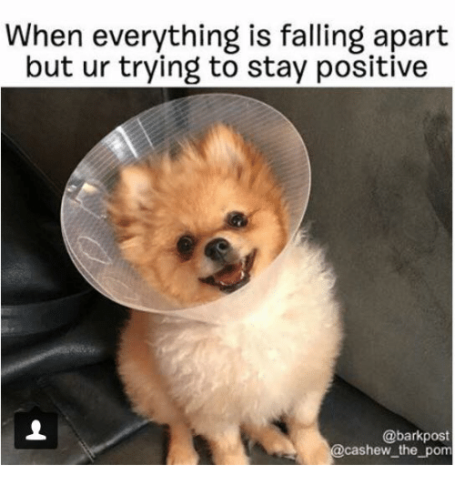 Everything Is Funny Meme : Funny fall memes of on sizzle winning meme