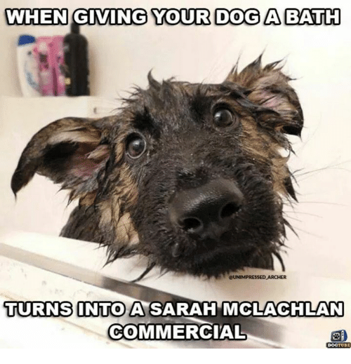 when giving your dog aa bath unimpressed archer turns into 15292736 when giving your dog aa bath unimpressed archer turns into a sarah