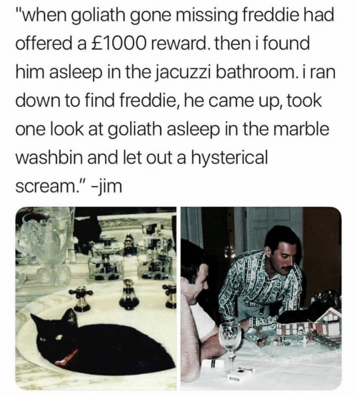 """hysterical: """"when goliath gone missing freddie had  offered a £1000 reward. then i found  him asleep in the jacuzzi bathroom. i ran  down to find freddie, he came up, took  one look at goliath asleep in the marble  washbin and let out a hysterical  scream."""" -jim"""