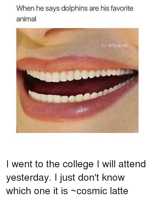 Dolphin: When he says dolphins are his favorite  animal  IG: @Text post I went to the college I will attend yesterday. I just don't know which one it is ~cosmic latte