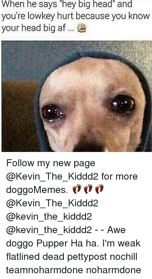 Memes, 🤖, and Doggo: When he says hey big head and  you're lowkey hurt because you know  your head big af Follow my new page @Kevin_The_Kiddd2 for more doggoMemes. 👣👣👣 @Kevin_The_Kiddd2 @kevin_the_kiddd2 @kevin_the_kiddd2 - - Awe doggo Pupper Ha ha. I'm weak flatlined dead pettypost nochill teamnoharmdone noharmdone