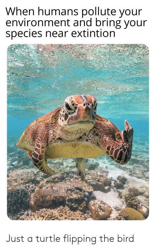 flipping the bird: When humans pollute your  environment and bring your  species near extintion Just a turtle flipping the bird