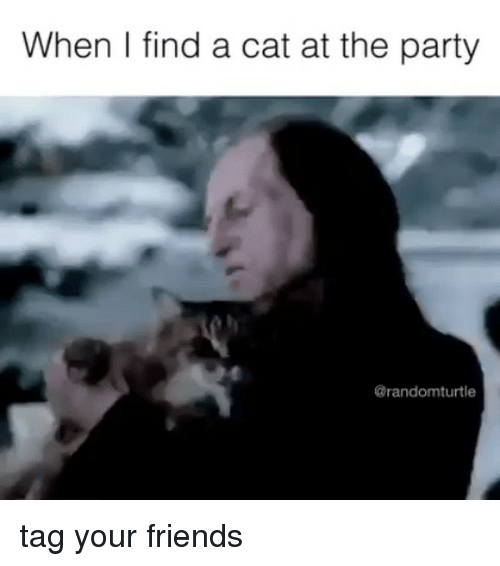 Friends, Memes, and Party: When I find a cat at the party  Carandomturtle tag your friends