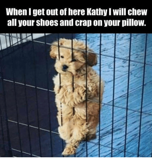 Kathie: When I get out of here Kathy Iwill chew  all your shoes and crap on yourpillow.
