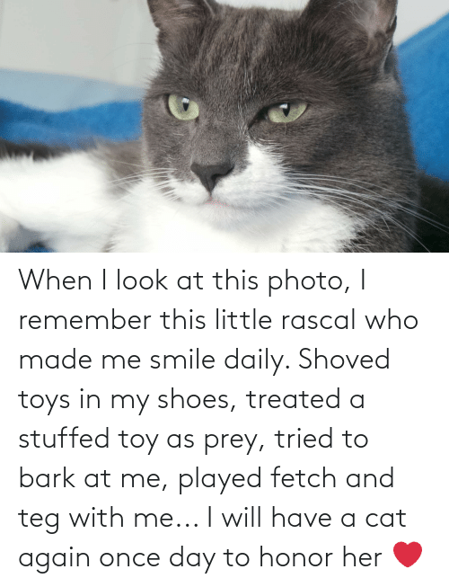 in-my-shoes: When I look at this photo, I remember this little rascal who made me smile daily. Shoved toys in my shoes, treated a stuffed toy as prey, tried to bark at me, played fetch and teg with me... I will have a cat again once day to honor her ❤️
