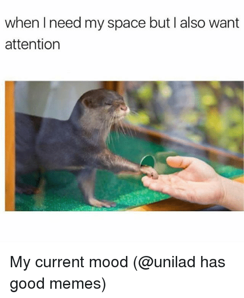 Funny, Memes, and Mood: when I need my space but I also want  attention My current mood (@unilad has good memes)