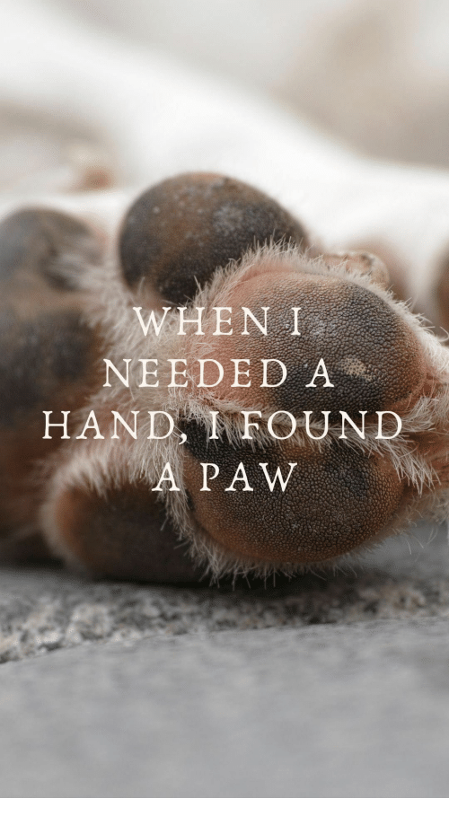 paw: WHEN I  NEEDED A  HAND FOUND  A PAW