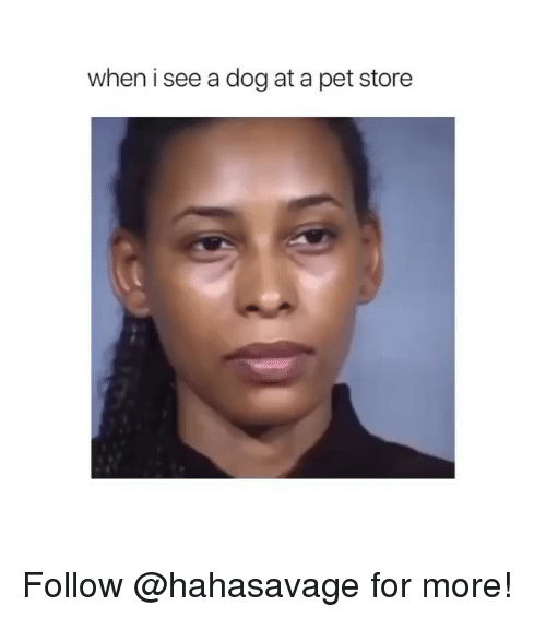 Pet Store: when i see a dog at a pet store Follow @hahasavage for more!