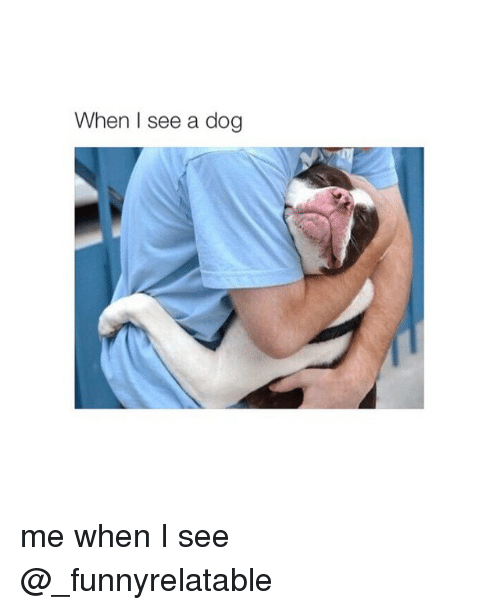 Dogs: When I see a dog me when I see @_funnyrelatable