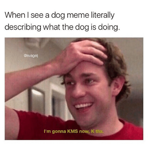 Meme, Memes, and 🤖: When I see a dog meme literally  describing what the dog is doing.  @svagel  I'm gonna KMS now, K th