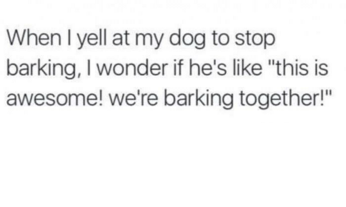 """yelle: When I yell at my dog to stop  barking, I wonder if he's like """"this is  awesome! we're barking together!"""""""