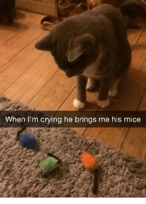 Crying, Grumpy Cat, and Ims: When I'm crying he brings me his mice
