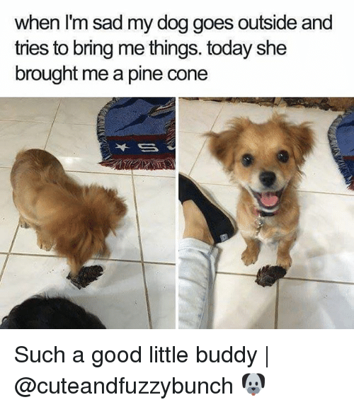 Coneing: when I'm sad my dog goes outside and  tries to bring me things. today she  brought me a pine cone Such a good little buddy   @cuteandfuzzybunch 🐶