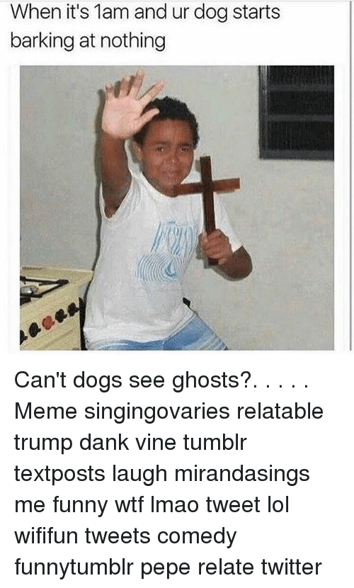 Memes, 🤖, and Dog: When it's 1am and ur dog starts  barking at nothing Can't dogs see ghosts?. . . . . Meme singingovaries relatable trump dank vine tumblr textposts laugh mirandasings me funny wtf lmao tweet lol wififun tweets comedy funnytumblr pepe relate twitter