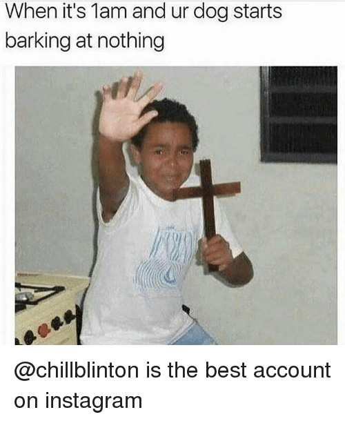 Instagram, Best, and Trendy: When it's 1am and ur dog starts  barking at nothing @chillblinton is the best account on instagram