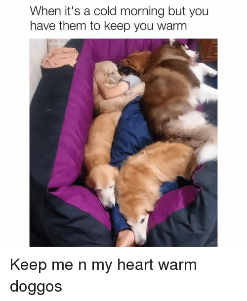 Memes, Heart, and Cold: When it's a cold morning but you  have them to keep you warm Keep me n my heart warm doggos