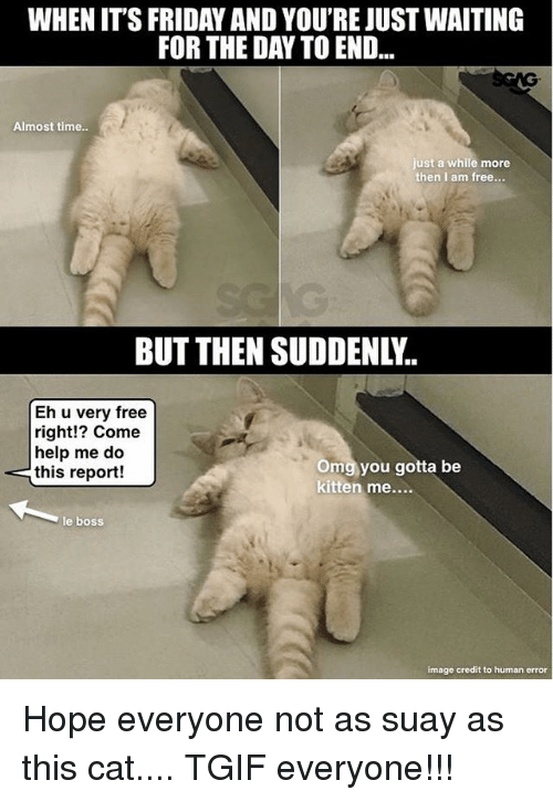 Friday, It's Friday, and Memes: WHEN IT'S FRIDAY AND YOU'RE JUST WAITING  FOR THE DAY TO END...  Almost time..  just a while more  then I am free...  BUT THEN SUDDENLY  Eh u very free  right!? Come  help me do  this report!  Omg you gotta be  kitten me....  e boss  image credit to human error Hope everyone not as suay as this cat.... TGIF everyone!!!