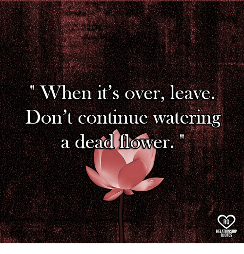 "Memes, Flower, and 🤖: "" When it's over, leave  Don't continue watering  a dead flower,  RO  RELATIONSHIP  QUOTE"