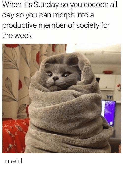 cocoon: When it's Sunday so you cocoon all  day so you can morph into a  productive member of society for  the week meirl