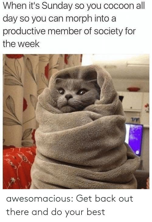 get back: When it's Sunday so you cocoon all  day so you can morph into a  productive member of society for  the week awesomacious:  Get back out there and do your best